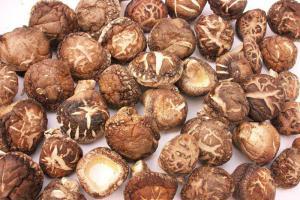 野香菇※野生の椎茸